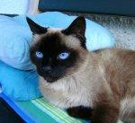 BILD0210 Hanni blaue Augen.jpg