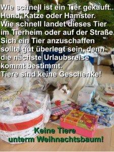 Keine Tiere unterm Weihnachtsbaum!.jpg