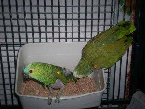 Ole und Blaubär in der BHG-Box.jpg