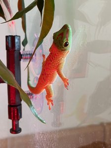 Gecko - 1.jpeg
