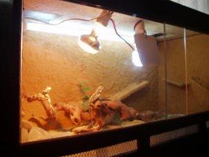 Reptil2 043.jpg