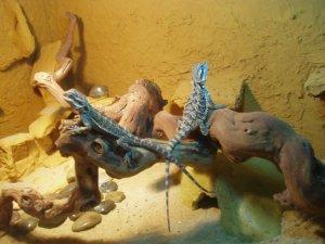 Reptil2 025.jpg