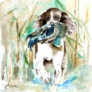 Springer Spaniel, Aquarell