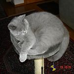 DSC01912http://www.kitticat.de/album.php?albumid=1134&attachmentid=90804